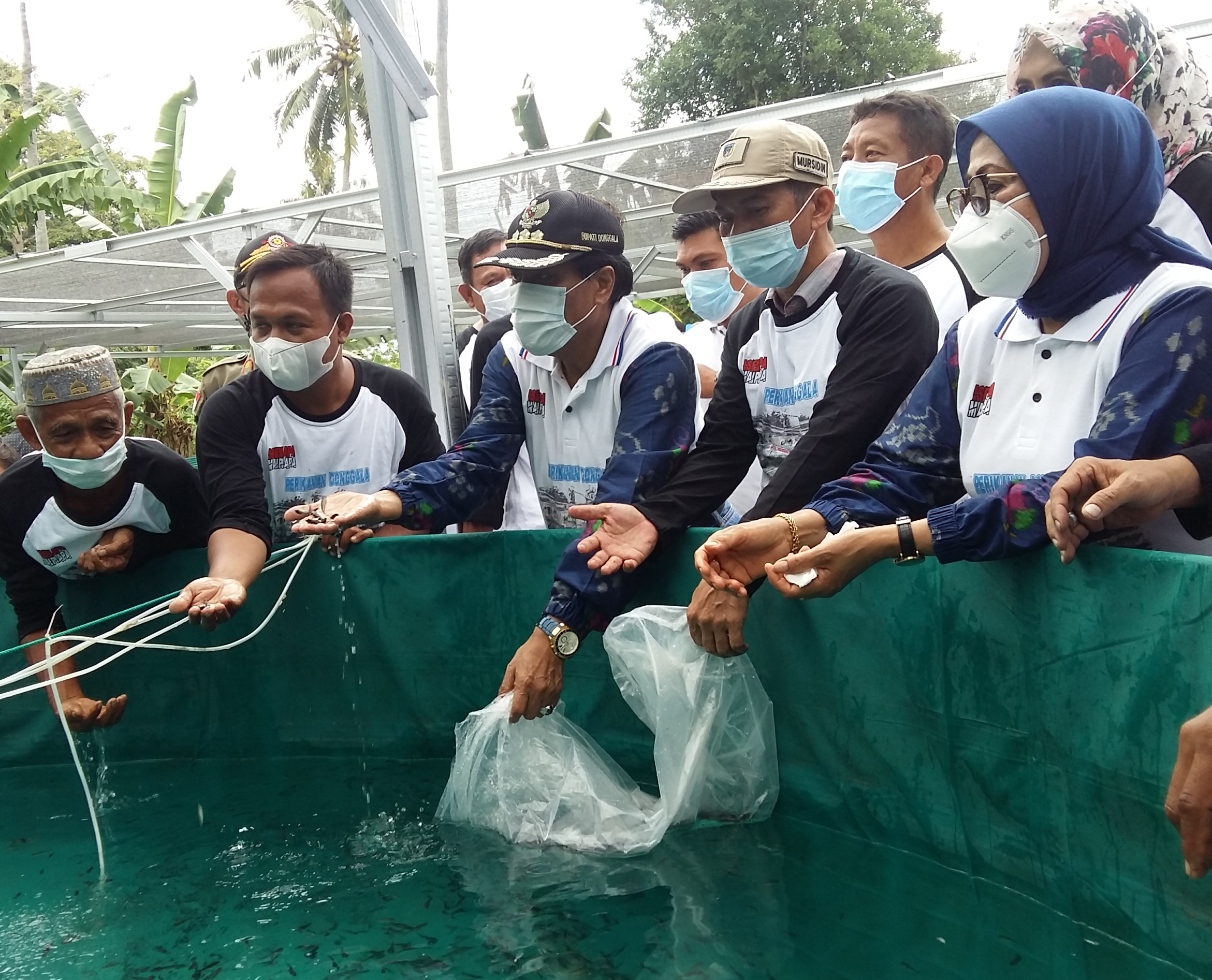 Dinas Perikanan Donggala Kembangkan Sistem Bioflok Budidaya Ikan Nila,