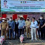 Wagub Apresiasi Program Pemberdayaan RMP Melalui Tanaman Jagung